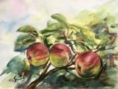 The Old Apple Trees last Harvest